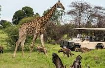 Penwellsafaris-Tailored safari only for you!