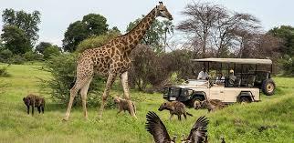 Penwellsafaris-Tailored safari only for you!